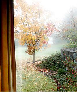 Banksia window view