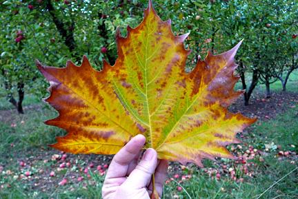 Autumn in dwellingup