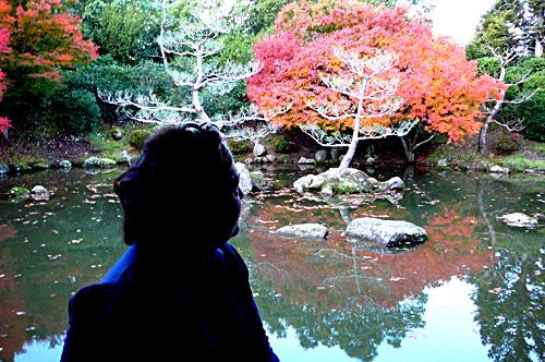 Japanese gardens, hamilton, nz