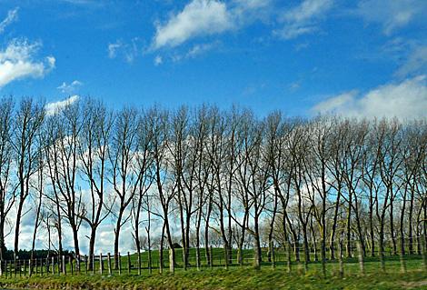 Trees as windbreakers