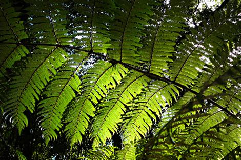 Nz foliage
