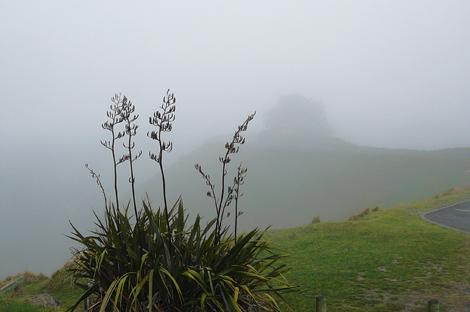 Peak vegetation hawkes bay