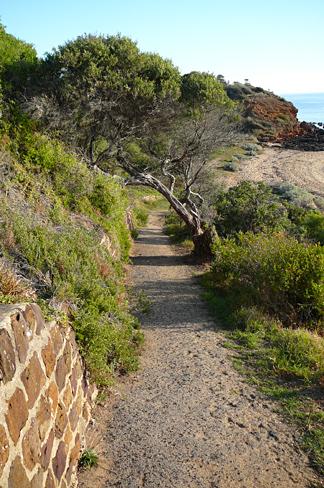 Beach path in mornington