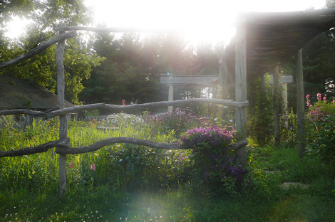 Late afternoon garden