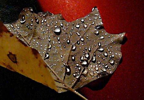 Night time rain