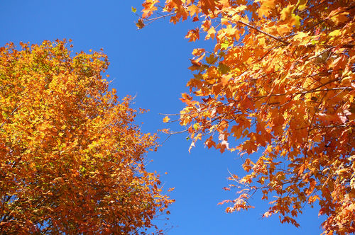 Boone foliage