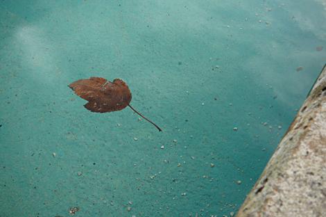 Leaf in hamilton gardens