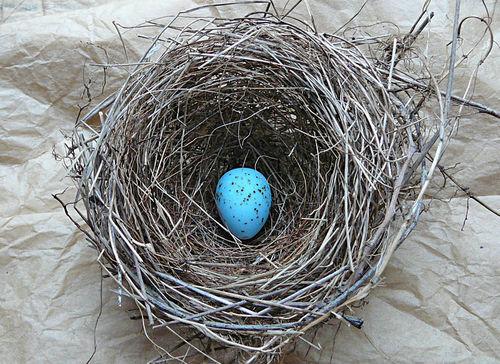 Ellen's egg