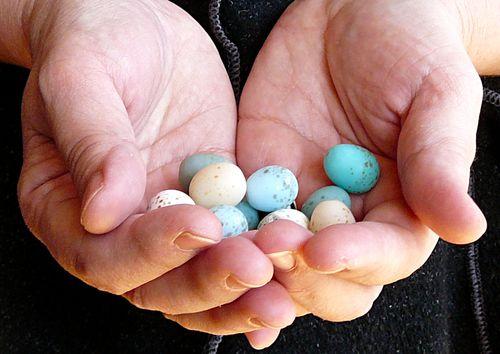 Eggs from ellen