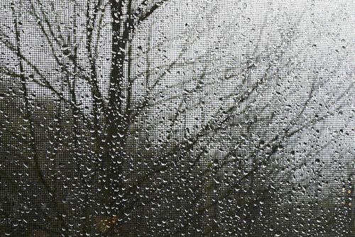 Tree in rain