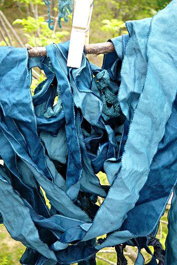 Indigo bunting ribbon