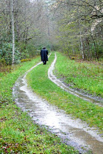 Mossy rain 11