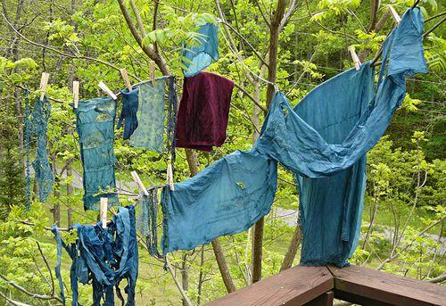 Indigo bunting blue