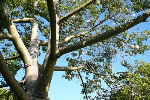 Mystery tree 1