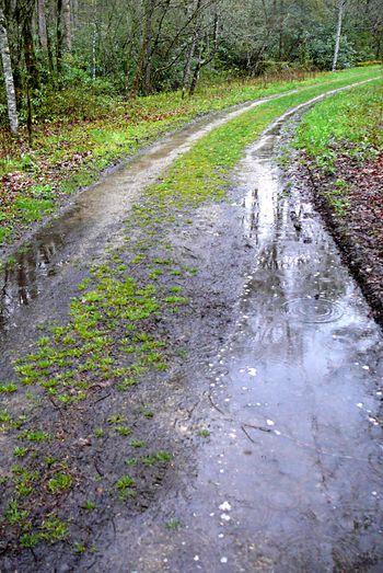 Mossy rain 7