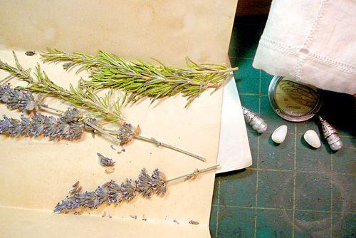 Sheila's lavender