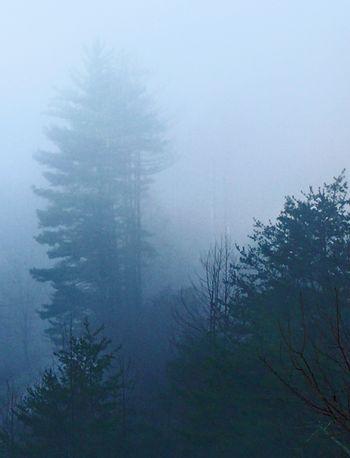 First light fog 1