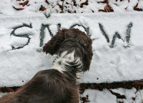 Walter eats snow