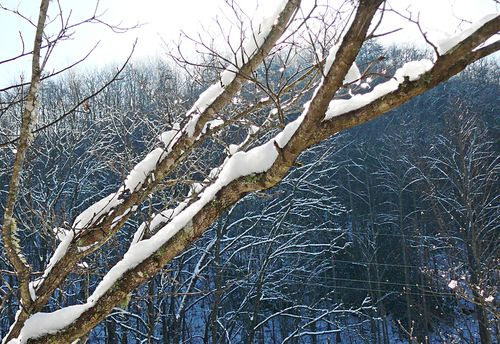 Winter solstice branch