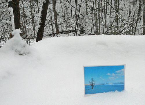 Snowphototree