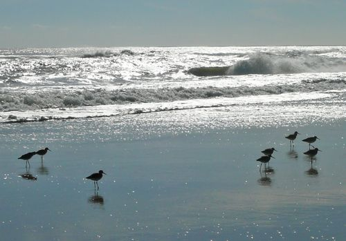 Sandpipers 1
