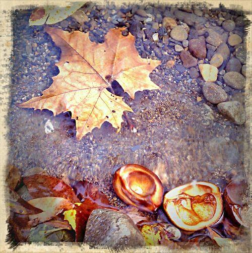 River leaf prayer 1