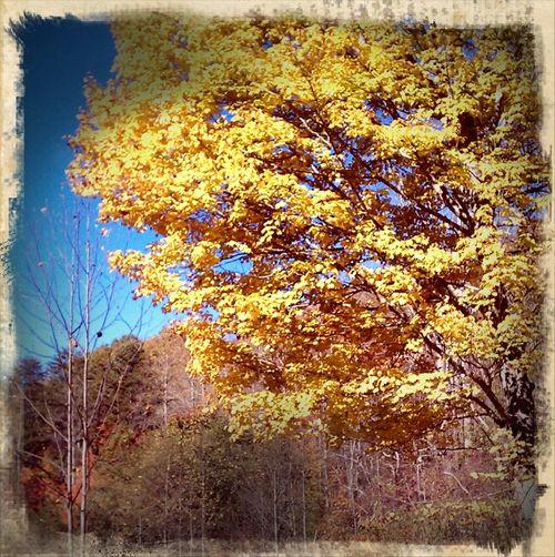 My tree