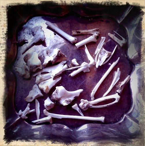 Owl pellet bones 1