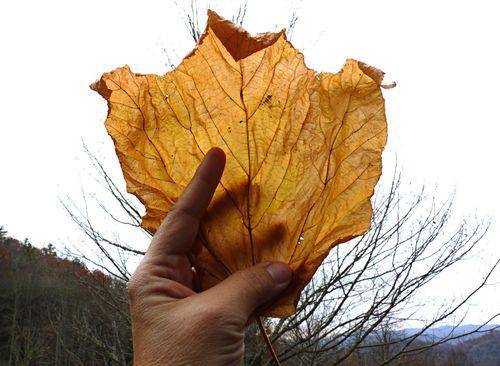 Leaf of silk