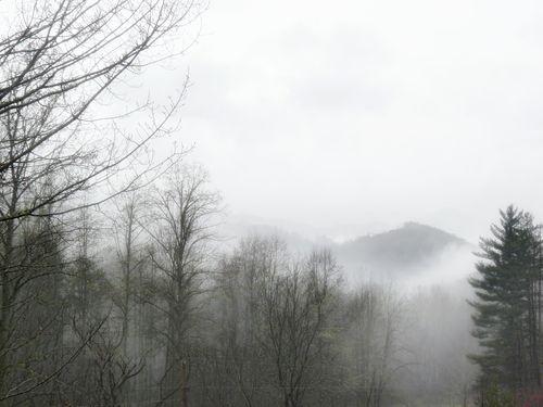 Tree of mist
