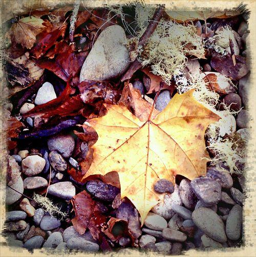 River leaf prayer