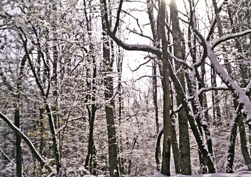 Snow light in park