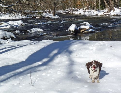 Snow happy at the river