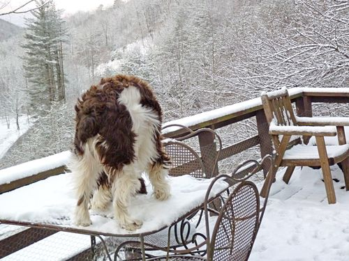 Snow trouble 2