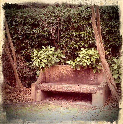 Grace bench