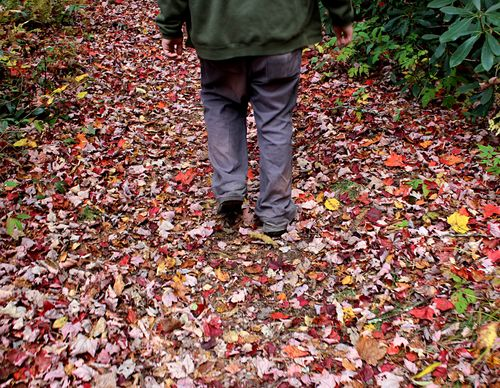 Panthertown colorful trail
