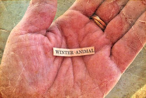 Winter animal