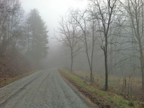 Firefly fog