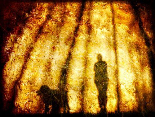 Shadow buddies in the magic light
