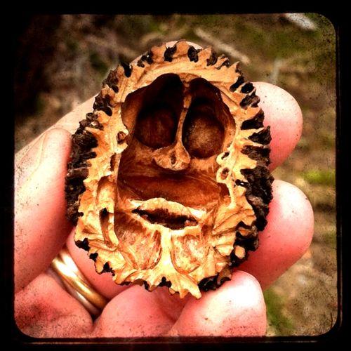 Mr nut