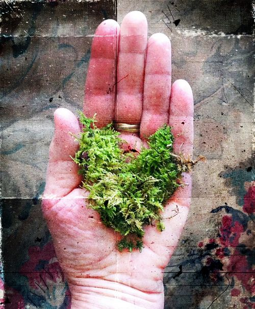 Mossy love 1