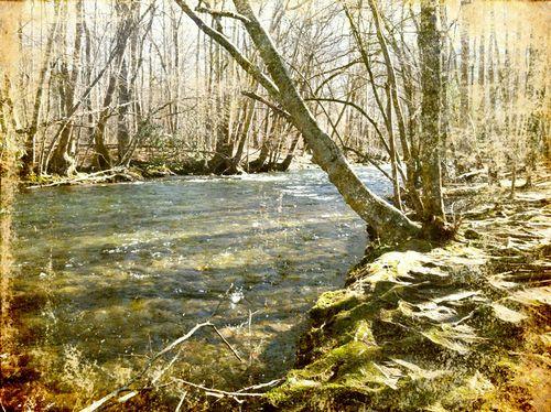 River blue 1 ornamental