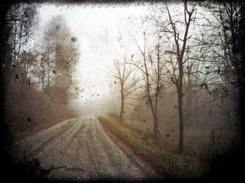 Firefly fog 1