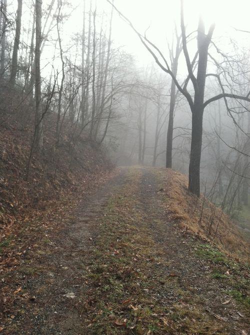 Firefly drive fog