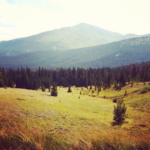 Boreas meadow
