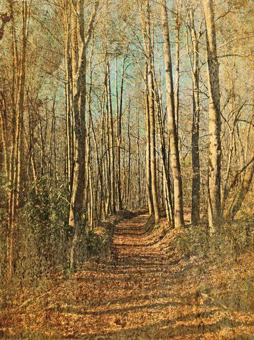 Mingus trail