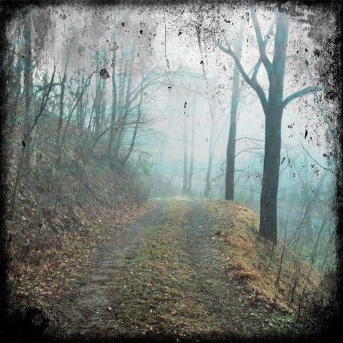 Firefly drive fog 1
