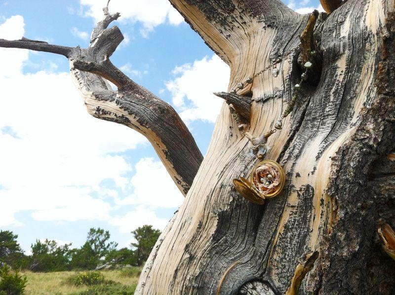 Tree jewel nest