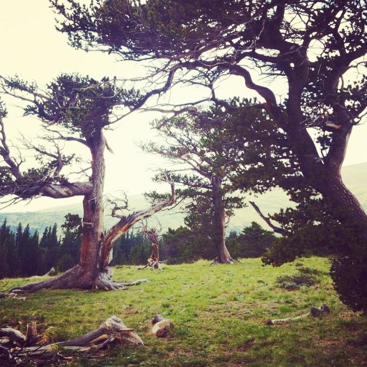Tree sacred grounds