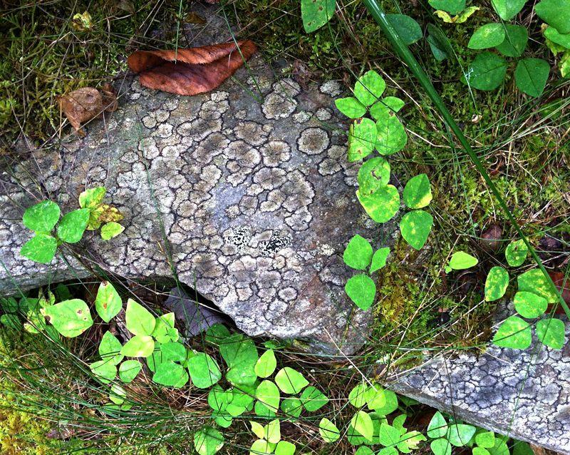 Rock imitates leaves